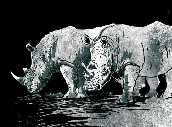 Q De Rhino Rhinos – RECONQ