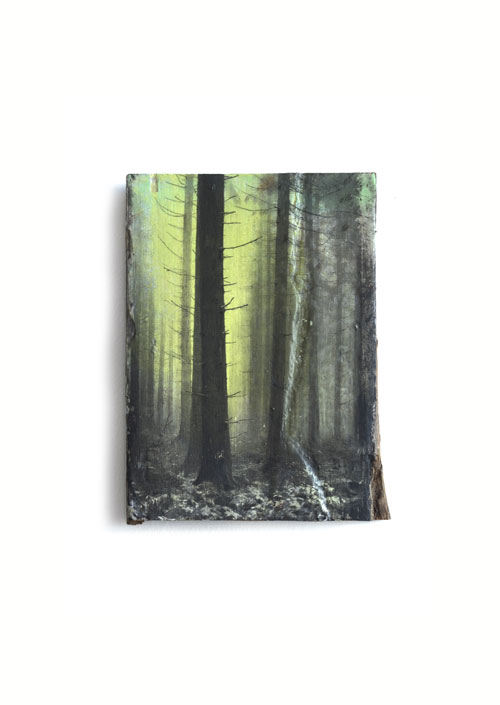 Wald 14/19